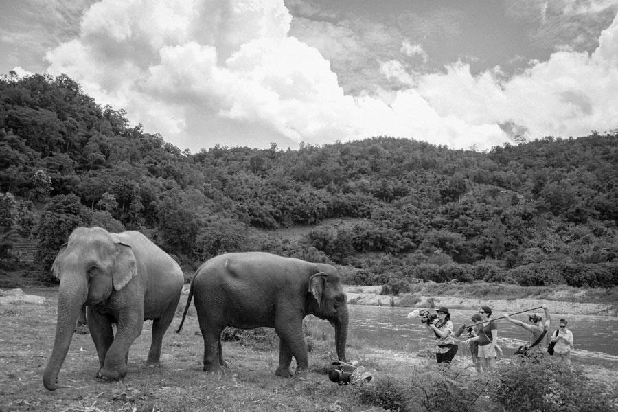 Lara Jean Gallagher Women Will Elephants
